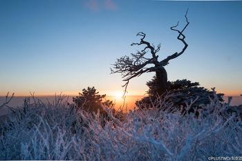 체감온도 영하 20도에서 만난 황홀하고 장엄한 태백산 일출모습