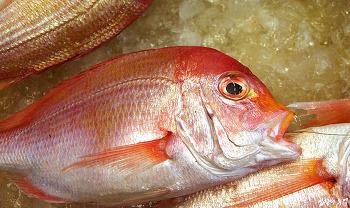 추석 차례상 생선, 방사능 피폭 확률은? (도미, 조기, 민어, 옥돔)