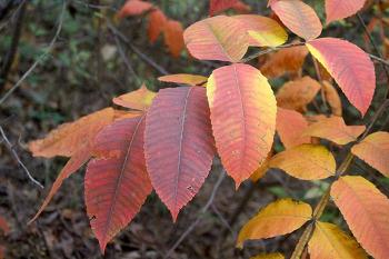 가을이 오는 김포 문수산 산림욕장 소풍