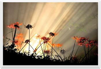 꽃무룻 9ㅡ21
