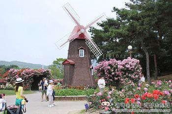 [과천 장미축제/장미꽃축제]어린왕자가 반한 과천 서울대공원 장미원축제