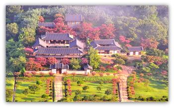 안동 배룡나무꽃과 병산서원  ㅡ2ㅡ7ㅡ26