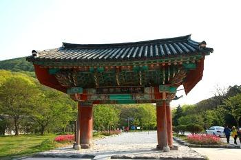 [고창여행] 선운산 선운사 동백꽃
