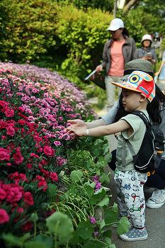 봄소풍 (아침고요 수목원으로)