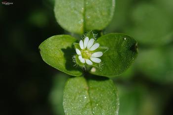 들꽃 #1