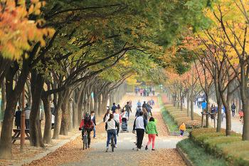 단풍(丹楓) - 인천대공원