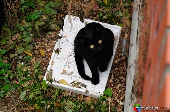 고양이와 깔개