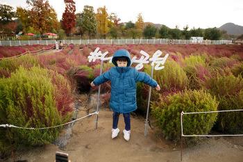 양주 나리공원 천일홍축제 다녀온 날