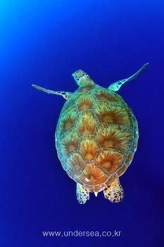 Underwater Mataking, Malaysia