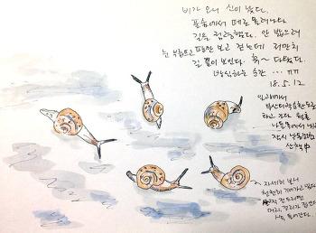 낙동강변 산책하다 만난 달팽이 떼