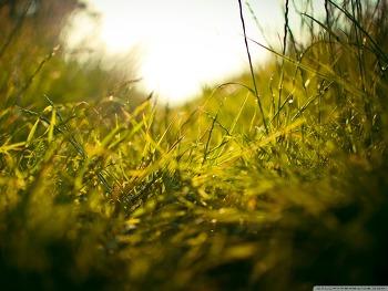 무료바탕화면 Summer Grass HD Wallpaper 무료 배경 이미지