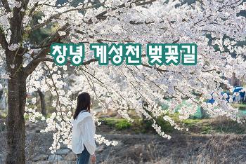 창녕 계성천 벚꽃길, 이런 예쁜 길도 있었구나!