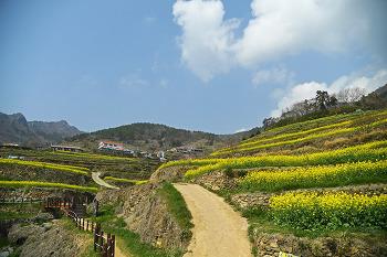 화사한 남해의 봄은 가천 다랭이 마을이 최고!!  (남해여행)