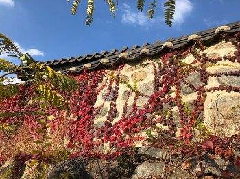 대전 우암사적공원 가을 준비 - 대전 단풍