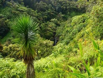 Garden Of Eden Arboretum Maui, Hawaii wallpaper