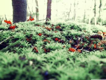 Ground Moss wallpaper