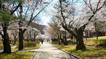 [대전여행-식장산 세천유원지]맘스터치 햄버거 들고~ 벗꽃구경