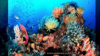 Simon's Undersea Travel - Komodo, Indonesia