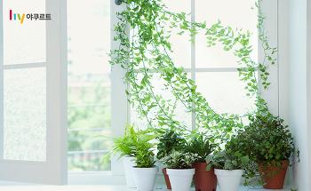 미세먼지 정화식물 추천! 집안에 놓기 좋은 공기정화 식물 BEST 4