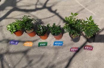 2019년 제12회 생명의 나무 나누어 주기 행사 참여 후기, 공기정화식물 재배방법