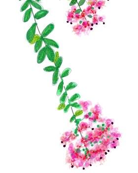 배롱꽃 연습