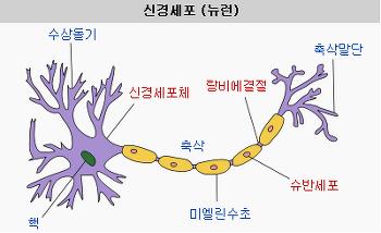뉴럴 네트워크