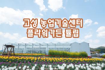 고성 농업기술센터 플라워가든, 튤립 & 유채꽃