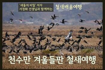 천수만 겨울들판 철새여행, 11월24일(토)