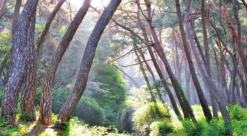 삼릉의빛내림 5ㅡ25