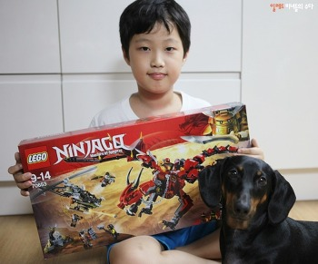 레고닌자고 70653 레드 드래곤 퍼스트본 ♡ 초등학교 남자아이 생일선물