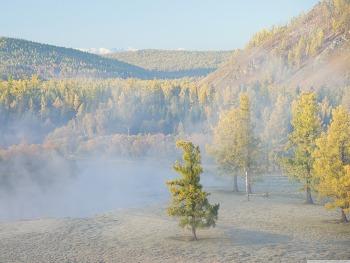 Forest River Fog wallpaper