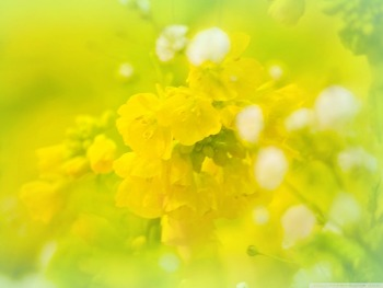 Spring will be here soon. yellow HD Wallpaper