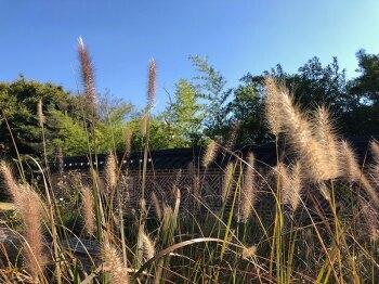 쌍청당 근린공원 주변 가을 풍경