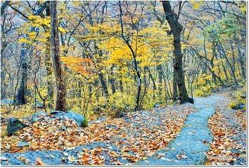 가을이 불타는 계명암 가는 길에서.