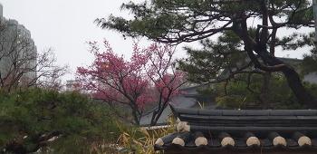 봉은사 꽃구경 15분.