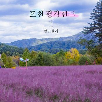 포천 평강랜드♪ 핑크뮬리 인생샷 데이트스냅 서울근교여행