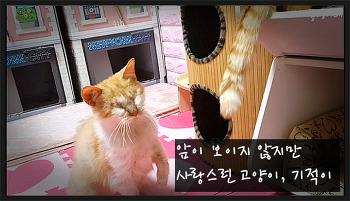 앞이 보이지 않지만 사랑스런 고양이, 기적이 by 22똥괭이네