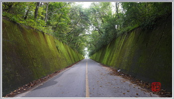 단양 이끼터널 ; 이끼터널이 아닌 낙서터널
