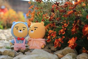 [전원생활] 라동이와 형제들, 꽃놀이 # 시골집 안녕 2018