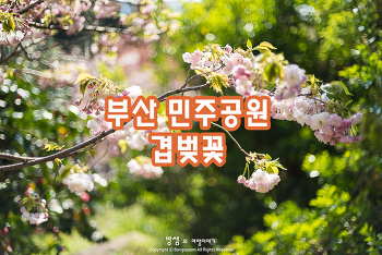 부산 민주공원 겹벚꽃, 봄날 만난 행복한 꽃길