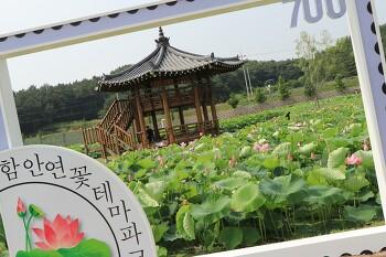 [꽃풍경 사진] 함안연꽃테마파크 연꽃 미리 가보았다.