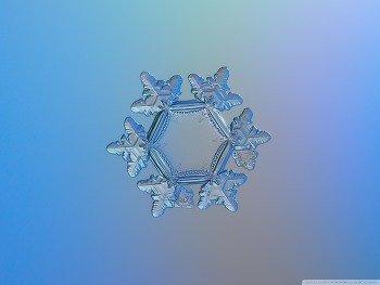 Snowflake Microscope Slides HD Wallpaper