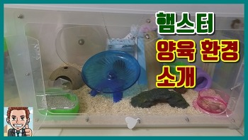 [햄스터 양육 일기] 양육 환경 소개