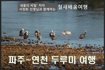 [주중번개] 파주~연천 두루미 여행 (1.28.월)