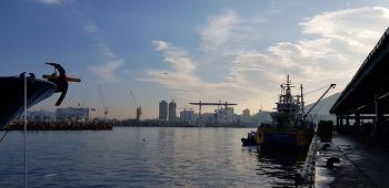 우리나라 최대 수산물 위판장 부산공동 어시장의 아침