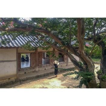 [2018/07/28]안동 병산서원 배롱나무꽃 개화상황