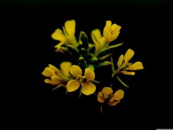 윈도우 바탕화면 테마 Flower In Black HD Wallpaper 무료 배경 이미지