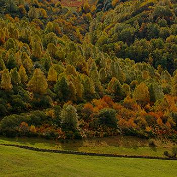 11월 여행은 여기! 가을 여행지 추천!