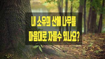 내 소유의 산에 나무를 마음대로 자를수 있나요?