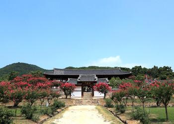 [안동여행] 서원을 점령한 배롱나무